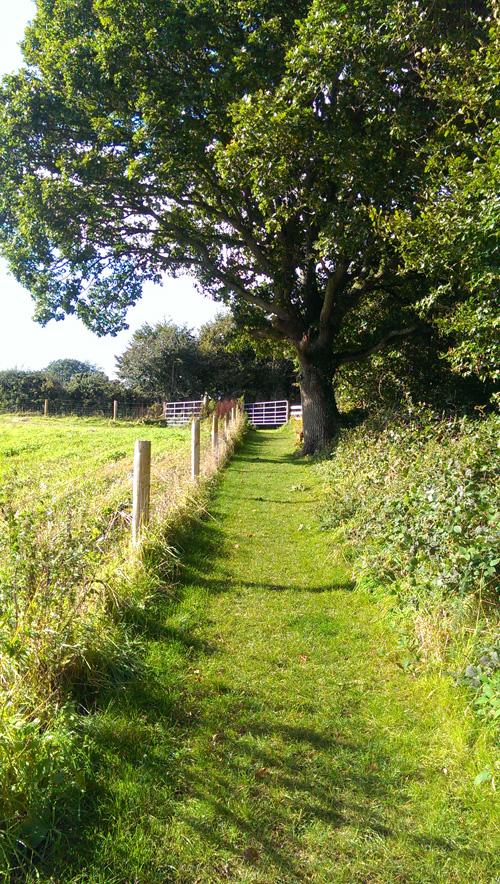 Woodland Walks – Wexford Lavender Farm